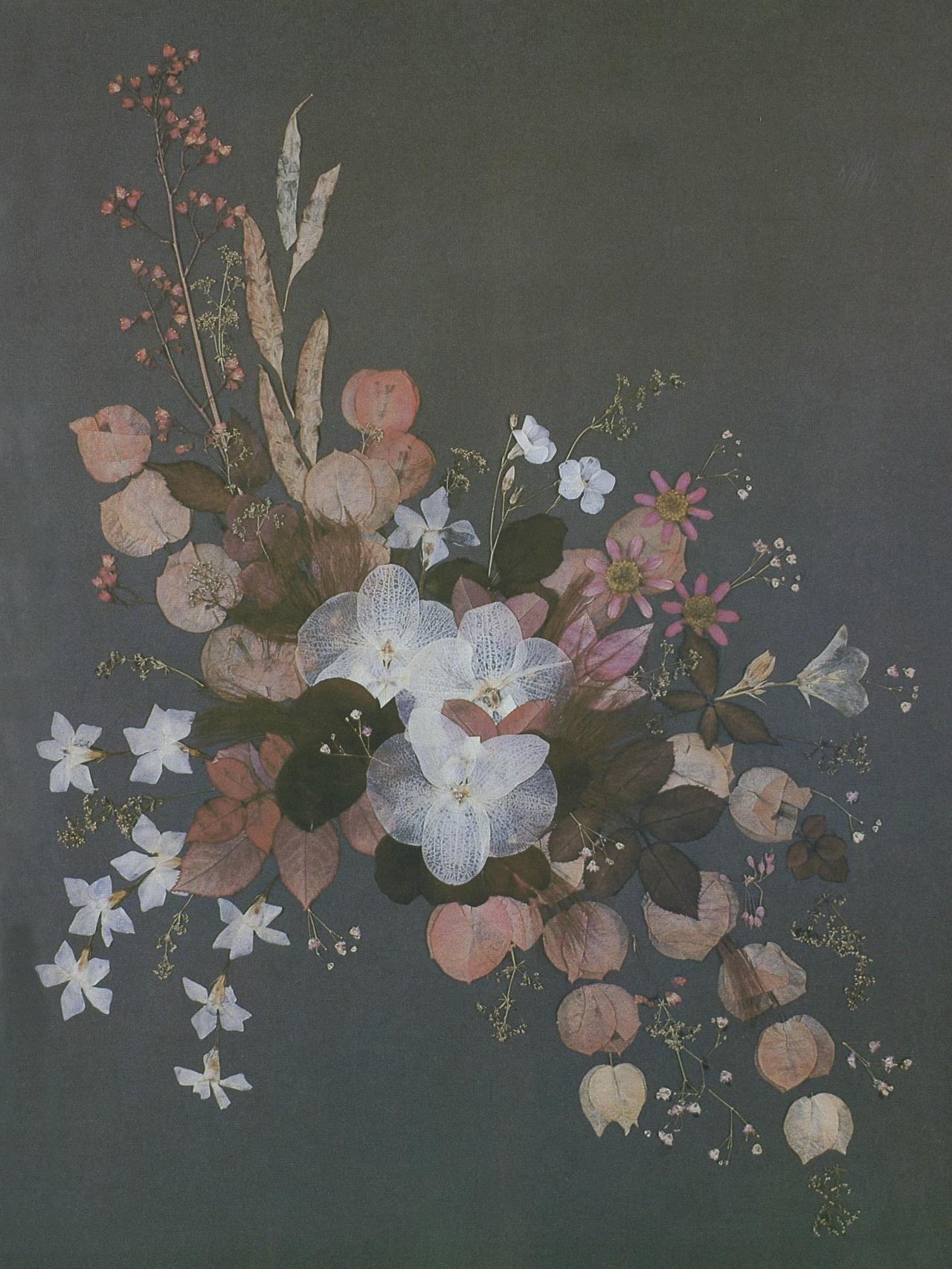 Grace Kellys Pressed Flowers Albertis Window